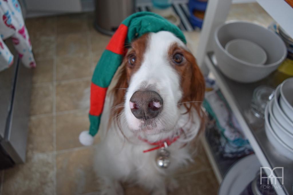 christmas hat on bruce the dog