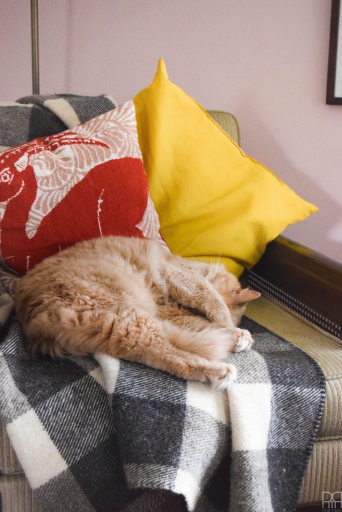 cat sleeping on plaid blanket on chair